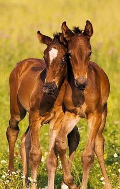Hanoverian foals, nothing like sharing brotherly love! Baby Horses, Cute Horses, Horse Love, Most Beautiful Animals, Beautiful Horses, Beautiful Creatures, Beautiful Babies, Cute Baby Animals, Animals And Pets