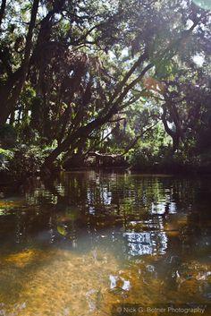 Kayaking the Estero River.