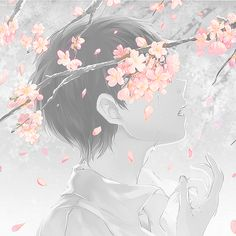Anime boy and cherry blossom