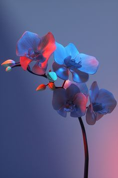 Flowers on Behance Orchid Wallpaper, Nature Wallpaper, Wallpaper Backgrounds, Iphone Wallpaper, Collage Mural, Flower Aesthetic, Cute Wallpapers, Aesthetic Wallpapers, Flower Art