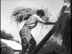 Courtesy of the British Pathe archives- a newsreel about the Land Girls program (also others helping on the harvest) in Britain during 1939. With men off fighting in war, women often took up jobs typically staffed with men. The Land Girls program in Britain was to help ensure farm labor so enough food could be grown for the war effort. Girls from urban and rural environments took part in the program. This was similar to a program implemented during WWI.