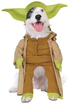 Pet Costumes - Bing images