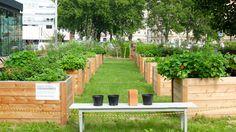 Research Garden Urban Gardening, Lawn And Garden, City Gardens, Urban Homesteading