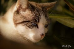 Blue Eyes Love | Flickr - Photo Sharing!
