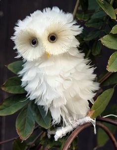 This fluffy white owl looks more like a feather boa than a real live bird. Owl, Birds, Animals, Animales, Animaux, Owls, Animal, Bird, Dieren
