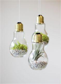 DIY Lightbulb Terrariums (fill with rocks, sand, or soil; add a succulent or air plant)