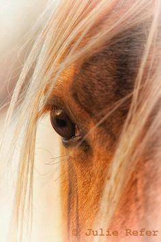 """Lo especial del trato con caballos es que toda manipulación de la verdad, tiene consecuencias. Sin optimismo, sin ilusión por la vida, no llegas a un caballo. Los caballos enseñan, que siempre hay un camino, siempre hay una solución mientras vivamos. Existe un lugar, un sitio, un espacio auténtico para cada uno de nosotros y encontrarlo es nuestra tarea  """"Klaus Ferdinand Hempfling"""" www.conectartecon.com"""