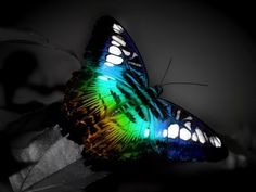 amazing butterfly..