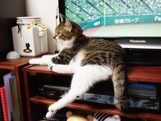 テレビの前の棚の上 |うにオフィシャルブログ「うにの秘密基地」Powered by Ameba