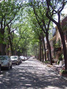 dappled sunlight, tree-lined street.