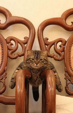 """""""no, you can't sit here. Dese are taken.."""""""