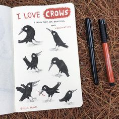 At the cottage, drawing crows (again). #crows #sketchbook #illustrationoftheday