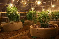 Excellent Greenhouse #smoke Join Us at SmokeWeedEveryday.Org for More Weed Fun!