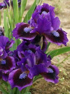 Exotic Flowers, Amazing Flowers, Purple Flowers, Beautiful Flowers, Yellow Roses, Pink Roses, Flowers Perennials, Planting Flowers, Flowers Garden