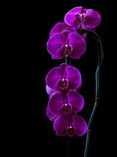 Deep purple by Steven Nuts on 500px