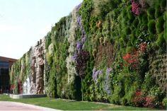 Scopriamo insieme il 'Giardino Verticale'