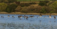 River Teifi, St Dogmaels, West Wales | Flickr - Photo Sharing!