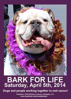 2014 Modesto Bark For Life