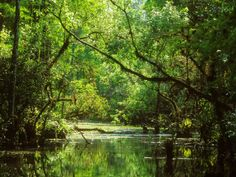 Everglades, USA.  http://www.worldheritagesite.org/sites/everglades.html