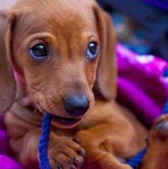 Cutest dog ever!!! My dream dog