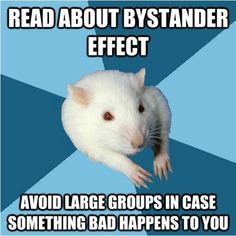 haha I love this psychology major rat. too funny! Psychology Jokes, Psychology Major, Psychology Student, Forensic Psychology, Abnormal Psychology, Freudian Psychology, Family Psychology, Evolutionary Psychology, Psych Major