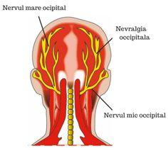 nervii occipitali Neon Signs, Health, Medicine, The Body, Health Care, Salud