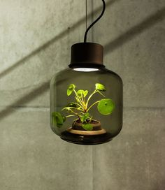 This Plant-Filled Lamp Needs No Maintenance