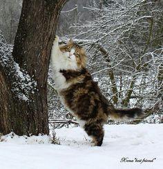 Beautiful winter fur coat!