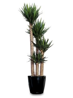 Planters   Planters and Indoor Plant Containers for Sale ...