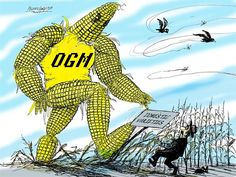 cartoonpolitics: The EU is set to approve a new type of US-developed genetically modified maize for cultivation in Europe despite huge oppo. Plant Pathology, Social Issues, Php, Cartoons, Europe, News, Cartoon, Cartoon Movies, Comics And Cartoons