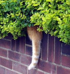 Mixed cat tail plantings are ideal for walls... & with 3 cats in the yard, they are bound to pop up anywhere!
