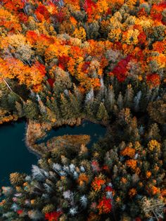 Nature Shows It's True Colours As The Season Changes The Beautiful Autumnal Colour Come To The Forefront | Media Drum World