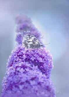 In the purple heaven - null