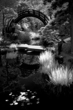 japanese tea garden  Anton Falcon