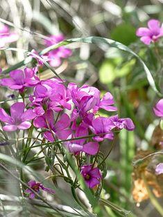 Quelques fleurs comestibles à découvrir