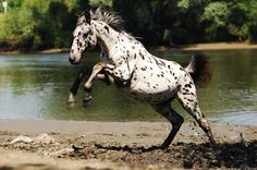 Appaloosa - almost take-off