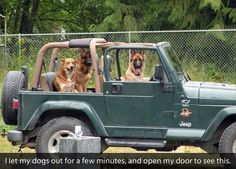 Big dogs drive Jeep Wranglers with the TOP DOWN! Little dogs expect YOU to drive! Funny Animal Pictures, Funny Animals, Cute Animals, Funny Photos, Funny Images, Jeep Wranglers, Zombie Survival, Survival Gear, Funny Cute