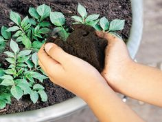 How to Grow Potatoes in Pots >> http://www.hgtvgardens.com/potatoes/how-to-grow-potatoes-in-pots?soc=pinterest