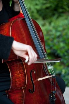 This photo is so pretty and I love the color of this cello.