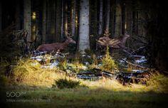 RUN by LarsMIK #animals #animal #pet #pets #animales #animallovers #photooftheday #amazing #picoftheday