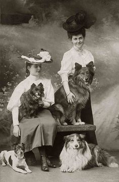 four dogs (Libby Hall Collection) Antique Photos, Vintage Pictures, Vintage Photographs, Old Pictures, Vintage Images, Animal Pictures, Vintage Abbildungen, Photos With Dog, Old Dogs