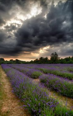 Clouds ☁️ Rain ☔️ Beautiful World, Beautiful Places, Beautiful Pictures, Scenery Pictures, Nature Pictures, Lavender Fields, Lavander, Guache, Nature Scenes