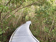"J.N. ""Ding"" Darling National Wildlife Refuge, Sanibel Island. Great for biking, or you can drive through also."