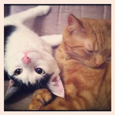 These two kitties look like my boys... <3