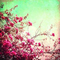 Canvasdoek Vintage Flowers