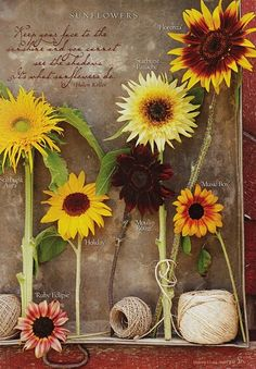 Every garden must also have sunflowers! Plus they double as scare crows...or so I hear...I plan to test this out...