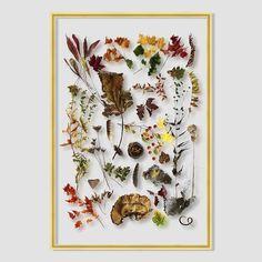 Still Acrylic Wall Art - Autumn Botanicals | west elm