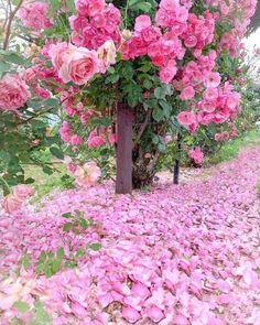 Nature Rose, Pink Nature, Garden Yard Ideas, Easy Garden, Romantic Roses, Elegant Flowers, Serenity Garden, Watercolor Flower Background, Starting A Vegetable Garden