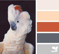 cockatoo color