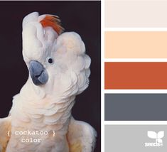 cockatoo color- for a bright lving room maybe?